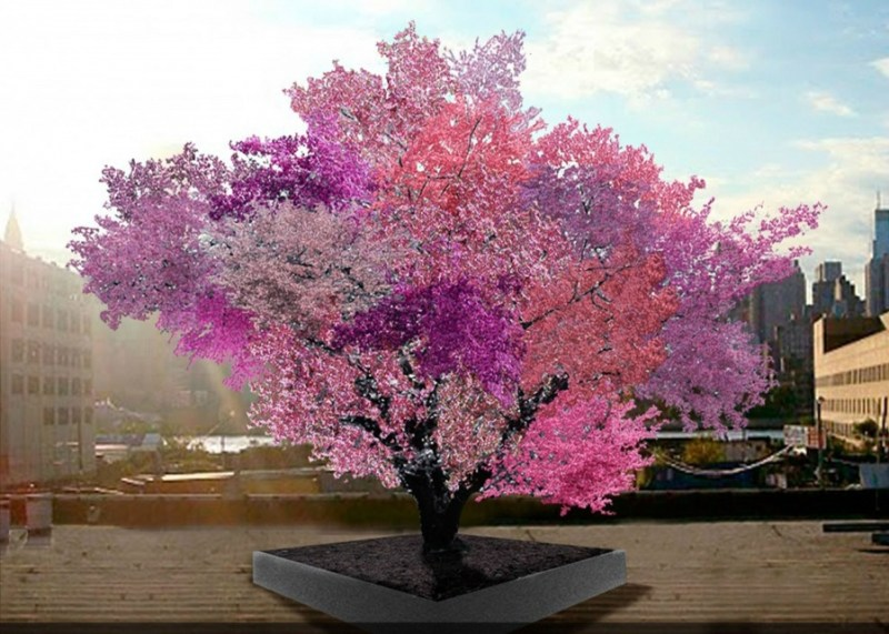 A Frankenstein Tree  - 14 Most Beautiful Trees in the World