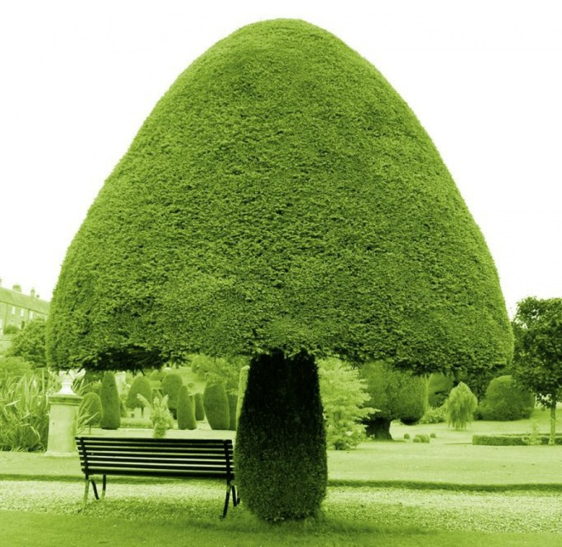A Mushroom-Shaped Tree  - 14 Most Beautiful Trees in the World