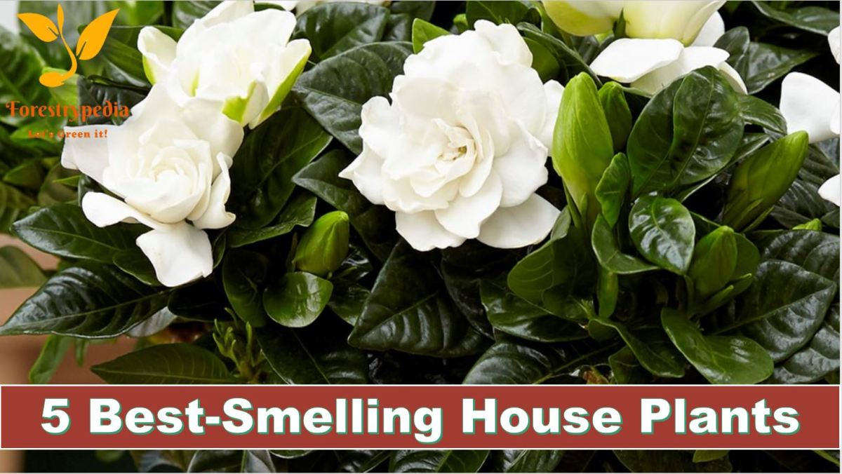 5 of The Best-Smelling House Plants
