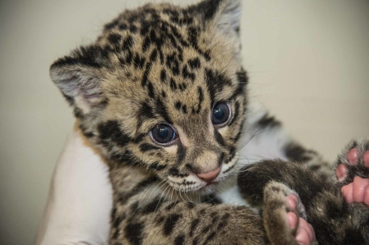 10 Baby Animals That Will Melt Your Heart - Forestrypedia
