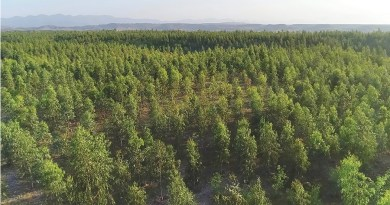 Takwara D.I. Khan | Domanzi Karak| Kashoo Bannu | Gambila | Barati Machankhel | Adami Tortala Bannu | Billion Tree Tsunami Program - Forestrypedia