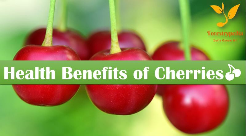 5 Health Benefits of Cherries - Forestrypedia