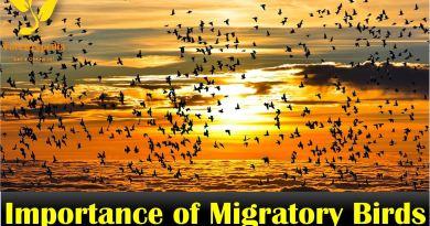 Importance of Migratory Birds - Forestrypedia