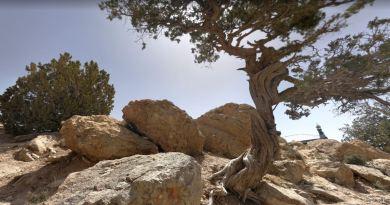 The Juniper Forests of Harboi Kalat Balochistan - forestrypedia.com