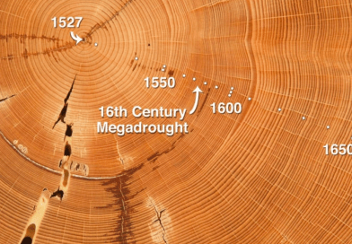 Know History from Tree Growth Rings - forestrypedia.com