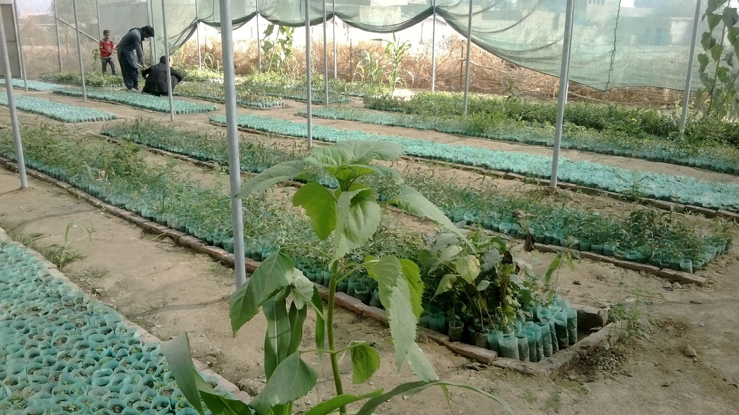 An Introduction to Nursery Management
