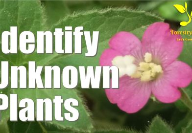 Here is how to Identify Unknown Plants using Visual Recognition Software - forestrypedia.com