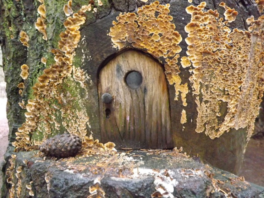 Fairy door and lichen