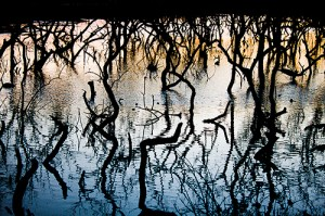 Mangroves in Kerala, India, destroyed to make way for elevated huts for the poor. Photo courtesy of Baban Shyam