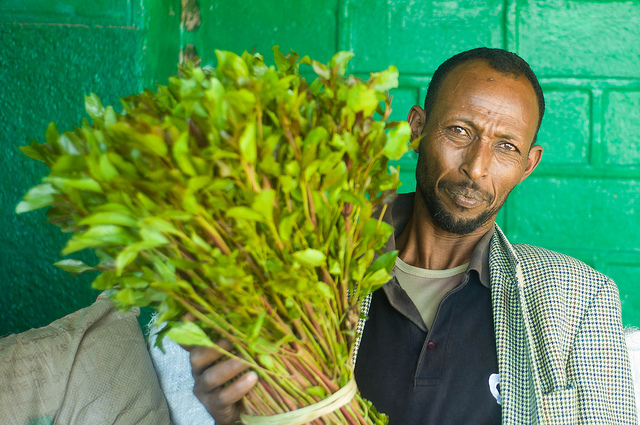 Khat cultivation in Ethiopia fuels economy, reduces