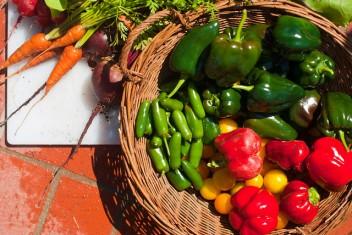 ¿Estamos dependiendo demasiado de los mismos cultivos? Fotografía de Flickr