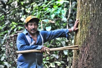 Con frecuencia los pequeños agricultores y las comunidades no cosechan los beneficios económicos de los bosques maderables debido a obstáculos normativos. Fotografía de Richard Vignola