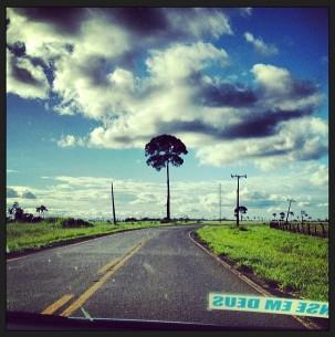 Un solitario árbol de castaña en los márgenes de los bosques, Puerto Maldonado, Perú. Fotografía de Kate Evans.