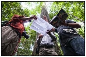 """La ONU nos invita a """"celebrar y crear conciencia acerca de la importancia de todos los tipos de bosque y de los árboles fuera de los bosques"""". Fotografía de Marco Simola"""