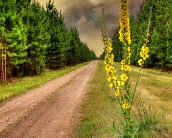 Pocos estudios han analizado las percepciones de la gente sobre el surgimiento de plantaciones de árboles. Fotografía cortesía de Bill Collison.