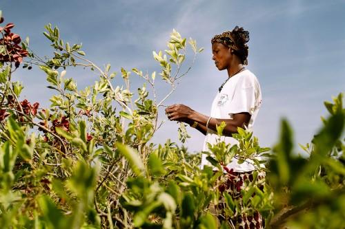 Datos de las Naciones Unidas indican que la población mundial crecerá de siete mil millones a más de nueve mil millones para el 2050, aumentando las ya elevadas tasas de deforestación en regiones tropicales y exacerbando las amenazas a la salud. CIFOR/Olivier Girard