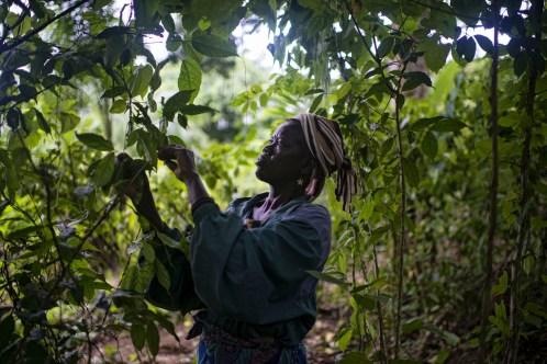 Les différences hommes-femmes doivent être pris en compte au moment de concevoir des stratégies de gestion forestière pour le Bassin du Congo. Ollivier Girard/CIFOR.
