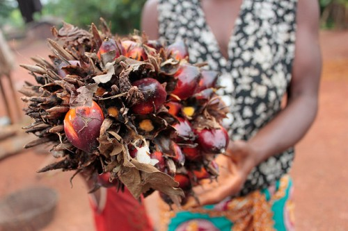 Cameroon has the potential to at least double its palm oil production and eliminate its dependence on imports, without having to encroach on any additional land. Nathan Cooke