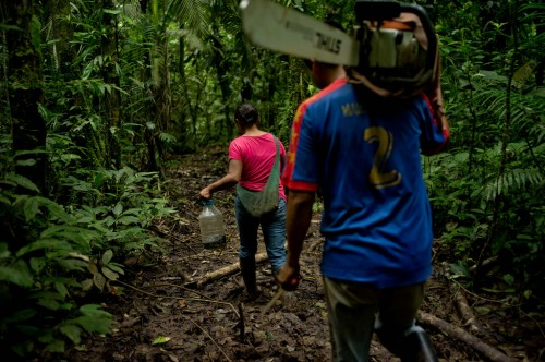 Some communities establish businesses to sell their timber, while others use the forest as a kind of savings account, where families may cut a few trees to pay for school expenses or a medical emergency. Tomas Munita/ CIFOR