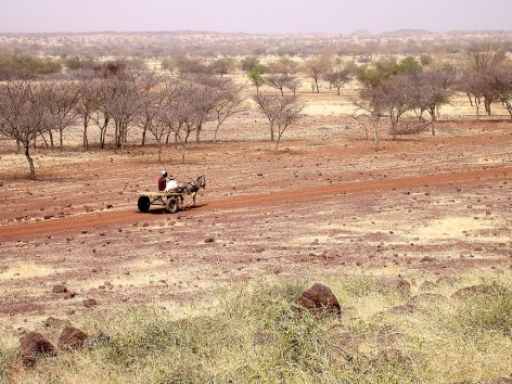 A villager makes his way through a dry forest in Burkina Faso, West Africa. More than 870,000 ha of forests were lost in a region of West Africa each year between 2000 and 2010, according to FAO.