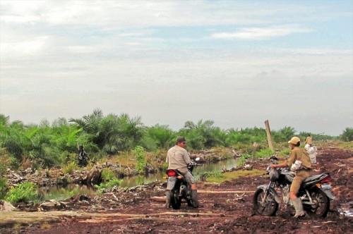 Usar  tierras degradadas en lugar de convertir los bosques naturales en plantaciones de palma aceitera tiene un menor impacto sobre la biodiversidad, dice el científico Douglas Sheil. Fotografía de CIFOR / Jenny Farmer.