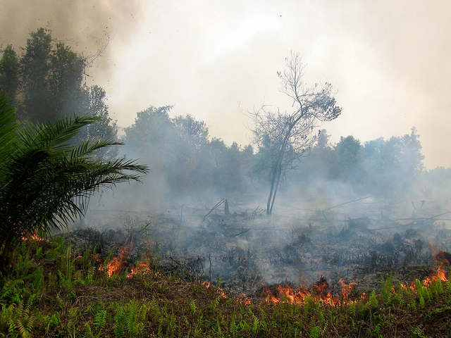 Peatland fire policy: From past to present