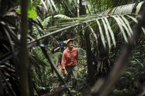 En Perú, investigadores de CIFOR están estudiando cómo los pequeños productores manejan y comercializan la bolaina de sus purmas. Foto: Ernesto Benavides/CIFOR