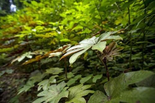 Bosque cerca de la aldea de Ngon, distrito de Ebolowa, Camerún. La mayoría de sistemas de compensación a propietarios de tierras en 40 aldeas de todo Camerún fueron ineficaces, ineficientes e inequitativos, según un estudio. Foto: Ollivier Girard/CIFOR.