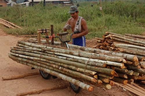 Panenan kayu siap untuk di olah di danau Sentarum, Kalimantan Barat. Para konservasionis mengajukan usul pengabungan kawasan lindung dengan konsesi kayu guna mempertahankan lanskap hutan ketimbang menjaga kawasan tersebut saja. Photo @CIFOR