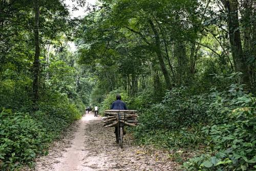 Recolectores de madera se trasladan desde Kisangani hasta la aldea de Masako en la República Democrática del Congo. Según los científicos, ayudar a la población local a adaptarse al cambio climático no ha sido una prioridad en la RDC, en parte debido a la percepción de que el gigantesco bosque es indestructible. Fotografía de Ollivier Girard / CIFOR.