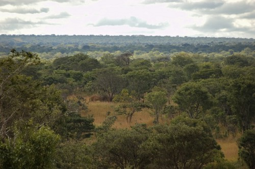 The Miombo woodlands of northern Zambia. Indirect impacts of mining are the largest cause of forest loss in Zambia. Jeff Walker/CIFOR photo