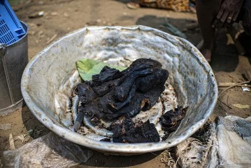 La viande de singe est en vente au marché Moutuka Nunene à Lukolela, en République démocratique du Congo. La viande de brousse est une nourriture préférée des Centrafricains urbaines et rurales même. Photo by Ollivier Girard for Center for International Forestry Research (CIFOR).