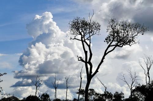 """La Amazonia brasileña ha visto cinco fenómenos climatológicos extremos en los últimos 10 años y """"es muy poco probable que se deba a una variabilidad natural"""", afirma un experto. Fotografía de Neil Palmer / CIFOR."""