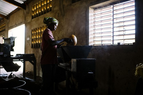 Traditional shea butter processing is done by village women who gather, boil and sun-dry, and roast the nuts before they are pounded and ground into a fine paste. The paste is mixed with water to separate the fat, which is then manually churned into creamy butter, Bukina Faso.   Photo by Ollivier Girard for Center for International Forestry Research (CIFOR).