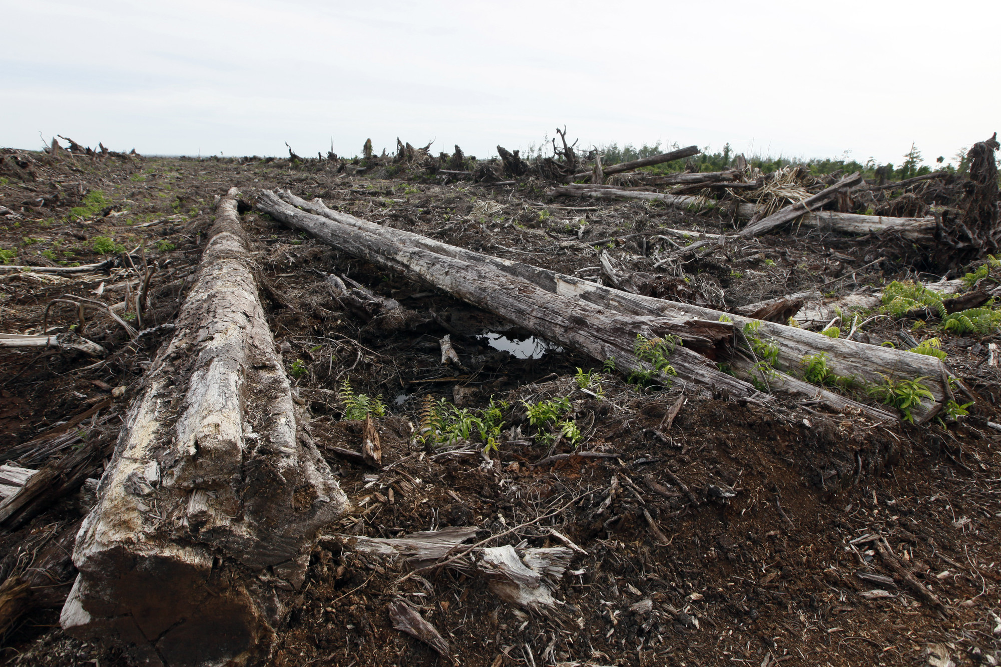 Peatland loss could emit 2,800 years' worth of carbon in an