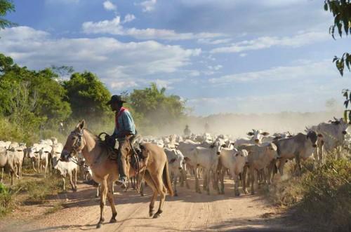 """Cría de ganado en São Félix do Xingu, un municipio del estado amazónico de Pará, Brasil. La deforestación en este lugar era tan grave que el Gobierno brasileño decidió agregarlo a su """"lista negra"""" de deforestación. Fotografía: Rodrigo Calvet."""