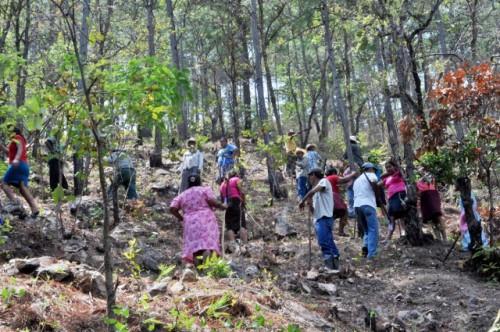 Bosque de la comunidad El Rodeo. Foto Herbert Reyes.