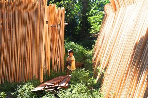 El comercio de madera de origen tropical es importante para los medios de vida de millones de personas en los países productores. La formalización de estas operaciones presenta riesgos, pero también puede significar recompensas. Foto: Aoife Bennet-Curry/ CIFOR.