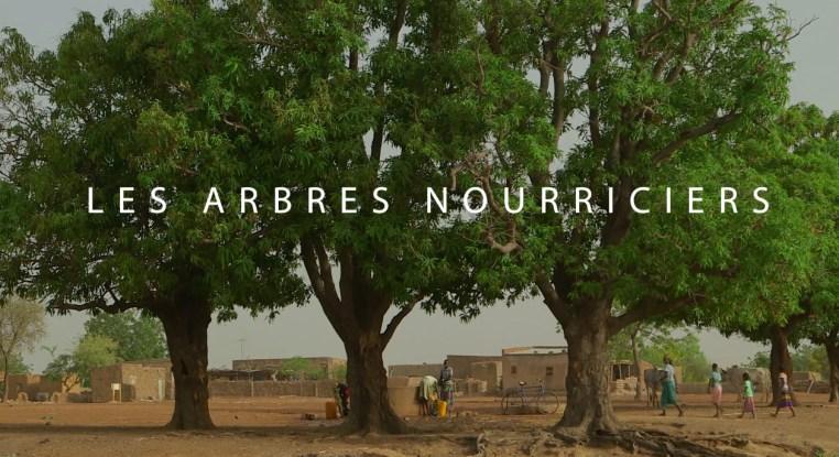 Le Néré, un arbre qui vaut son pesant d'or