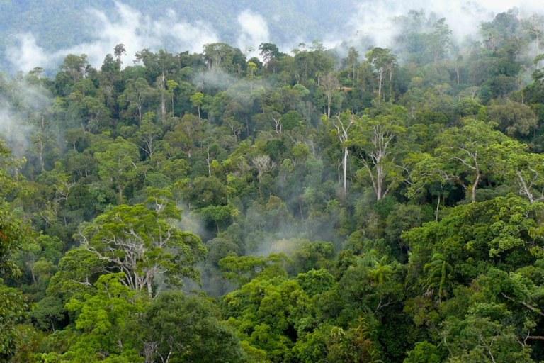 Mempelajari penyebab deforestasi di Kalimantan | Kabar Hutan, blog dari CIFOR