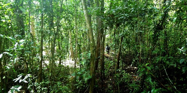 Bosque de turbera en la Amazonia peruana. Foto: Kristell Hergoualc'h/CIFOR.