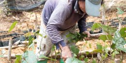 Advancing forest landscape restoration worldwide
