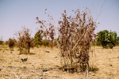 Addressing the dangers of degraded land