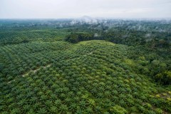 New map helps track palm-oil supply chains in Borneo