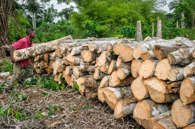 ¿Se deben quemar árboles para obtener energía?