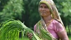 Relations hommes-femmes dans le domaine des forêts : Au-delà des chiffres