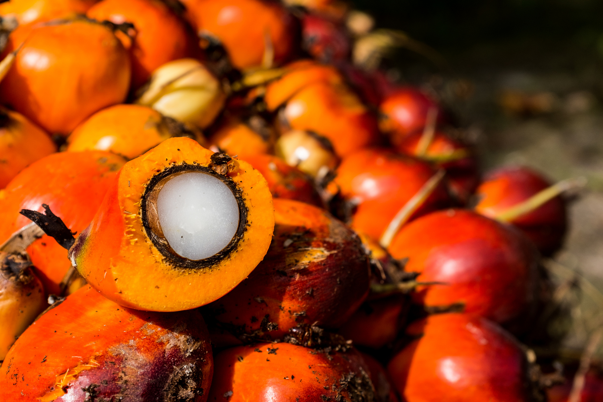 Turning down the heat in Indonesia's oil palm industry