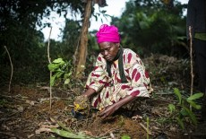 Restoring the world's forests: What does it mean for women's rights?