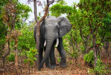 How safe are our wildlife sanctuaries?