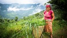 Restarting Nepal's forestry sector
